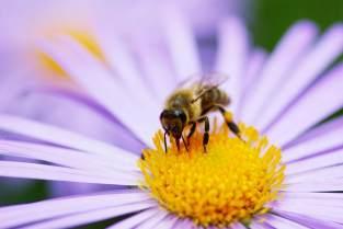 bee-on-flower.jpg.838x0_q67_crop-smart